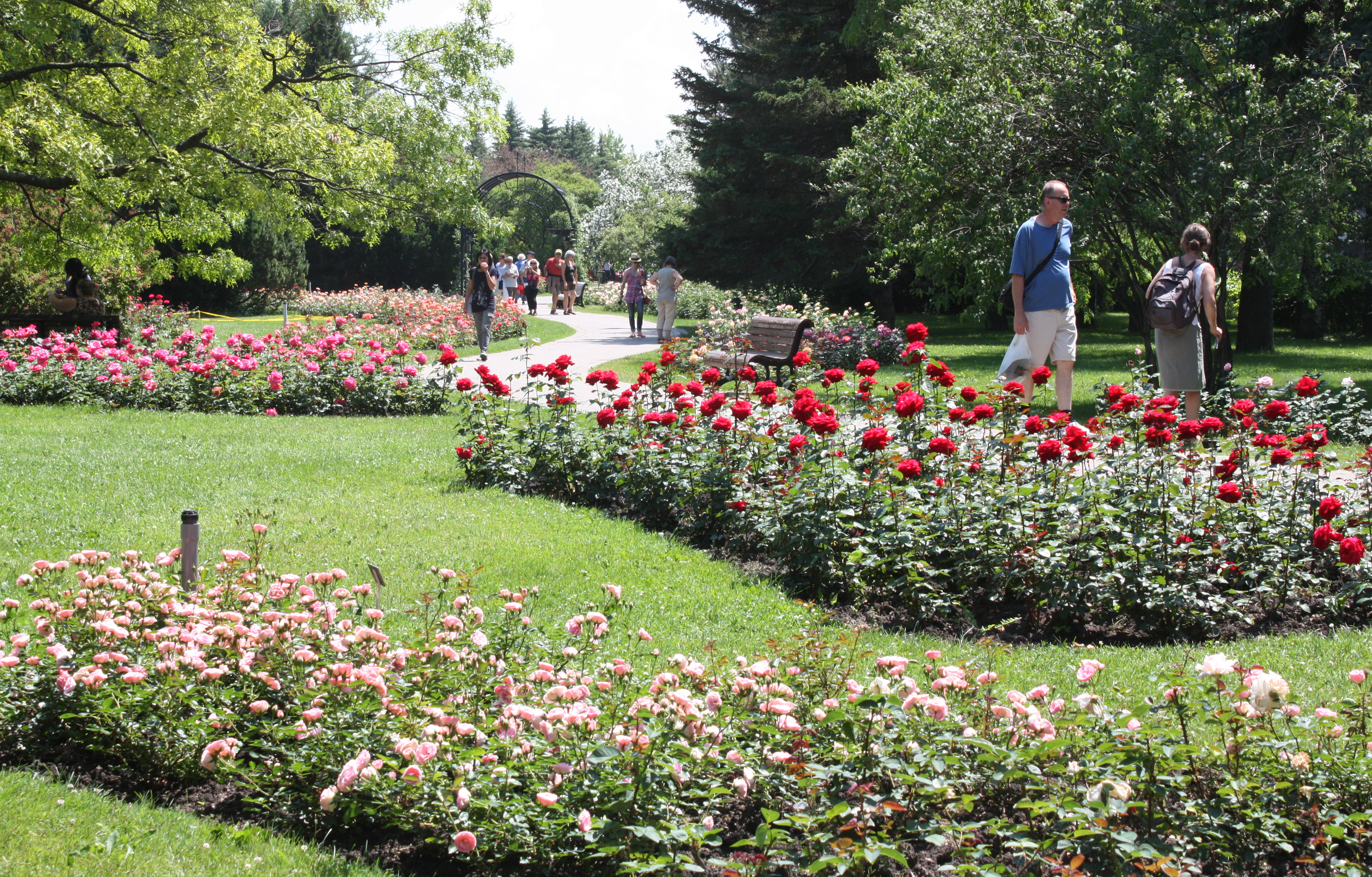 Sustainable Rose Garden In Montreal